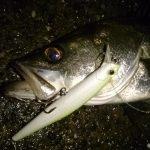 東京湾の雨!うれしい釣果で大満足