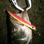 季節が変わればルアーも変り魚も変わる