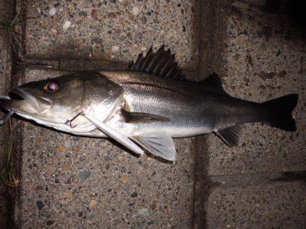水潮でも釣れる