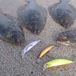 ヒラメ釣り!ルアーで攻略「全国版」時期や条件