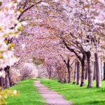 シーバス春パターンの基本と攻略「春を制す者は1年を制す」