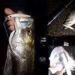 STXフックでバラシた魚を取り返せ!