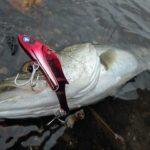 釣りの基礎はタナ!レンジ攻略が釣果の別れ目!フラれるのはゴメンだよ(笑)