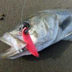 サーフヒラメ釣りの難しさ!思うように釣れる時ばかりでわないメンタル強くないと(笑)
