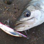 応用力が物を言う!釣れる魚を釣って楽しむ臨機応変に~www