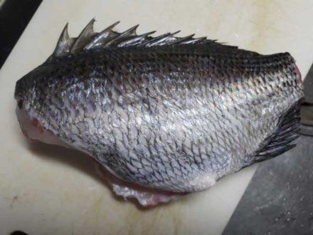 東京湾で釣った黒鯛